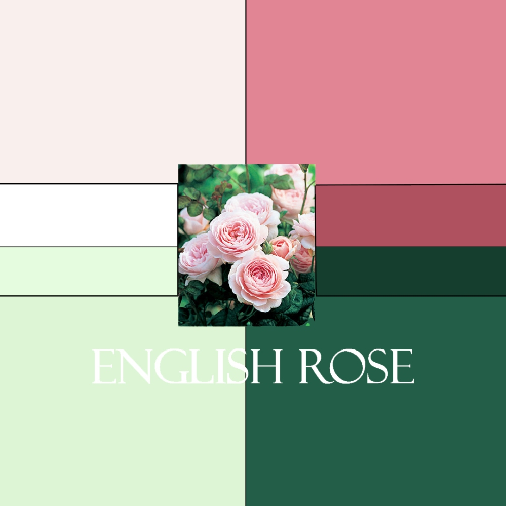 English Rose Colorway