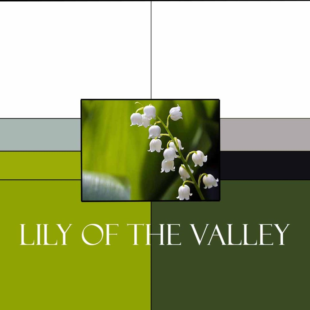 LilyoftheValleyColorway