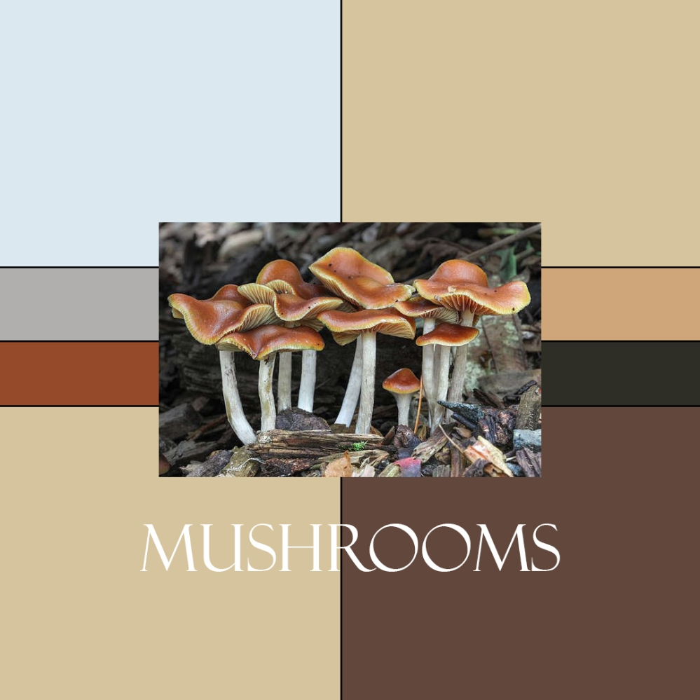 Mushrooms Colorway